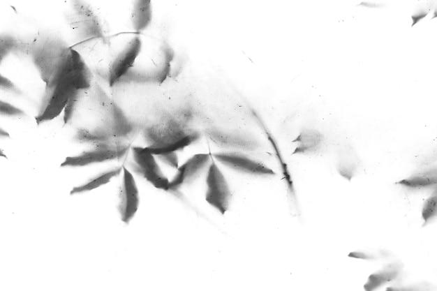 Ombres de feuilles sur les arbres comme texture sale vintage ou fond