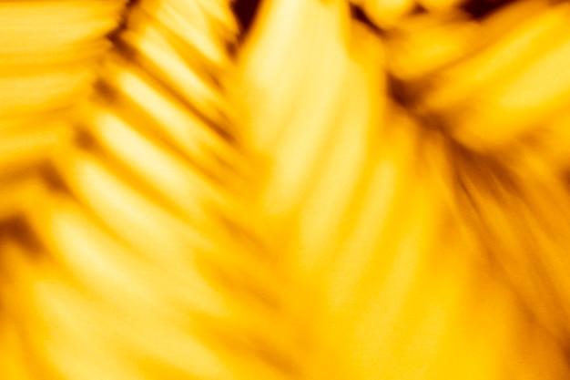 Ombres et feuilles de palmier