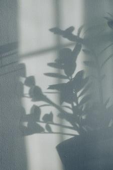Ombres de fleurs maison plante sur fond d'écran gris de fonds d'écran
