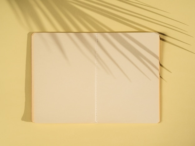 Ombres de paume sur une feuille de papier