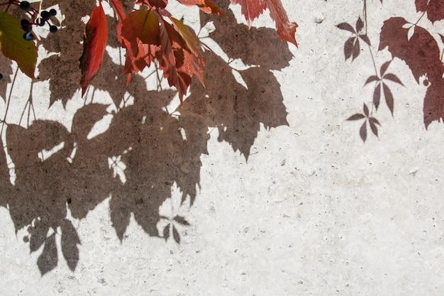 Ombres de plantes d'automne sur un mur de béton
