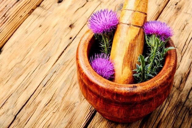 Onopordum.herbalism.tistal