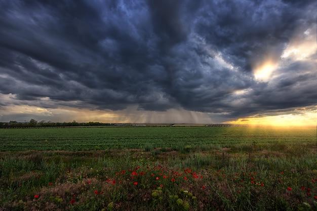 Orage sur un champ vert avec des coquelicots au premier plan, des bandes de pluie au loin et les rayons du soleil des nuages