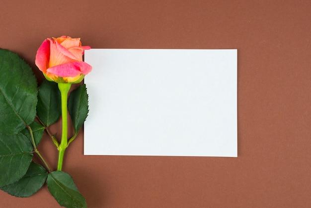 Orange rose fleur encadrant l'espace vide