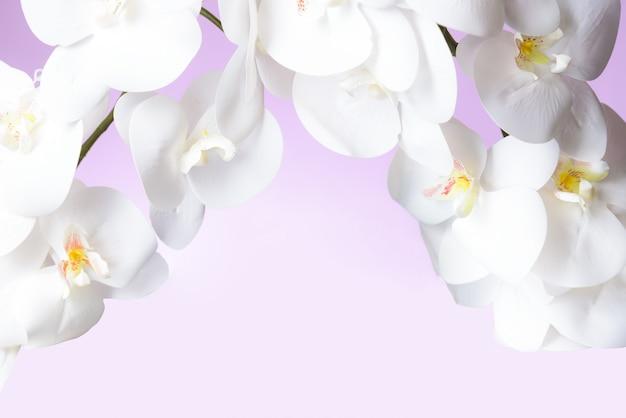 Orchidée blanche au pastel rose