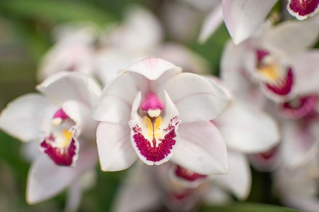Orchidée blanche avec flou d'arrière-plan. fleur beau fond.