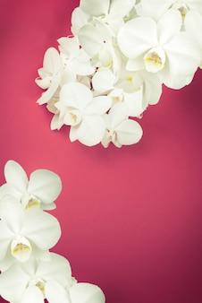 Orchidée blanche sur fond rouge.