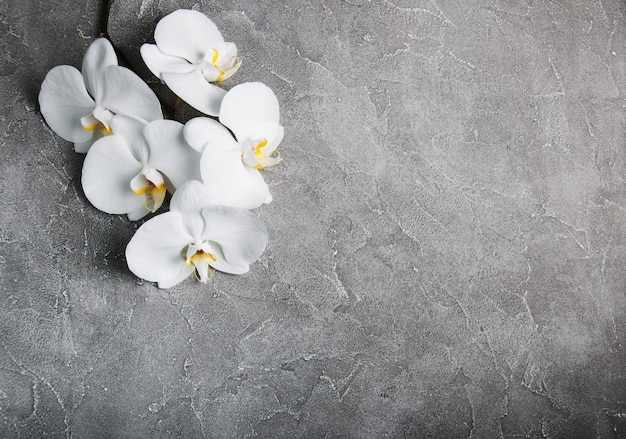 Orchidée blanche sur la pierre grise