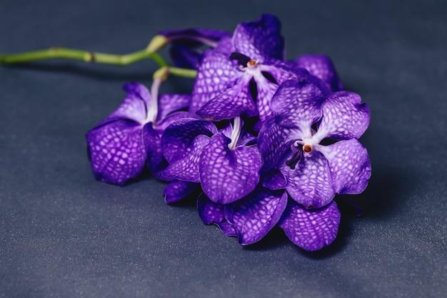 Orchidée bleue sur fond gris simple