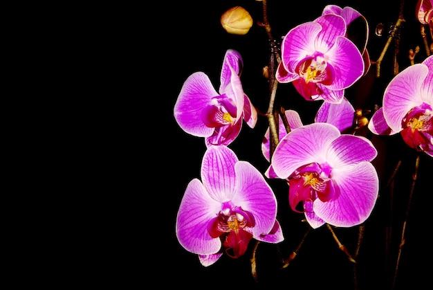 Orchidée sur fond noir