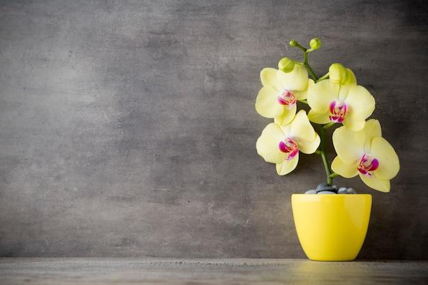 Orchidée jaune sur fond gris.