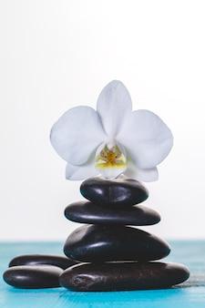 Orchidée sur des pierres volcaniques