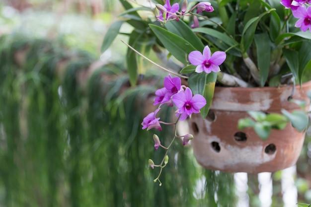 Orchidée sur le pot