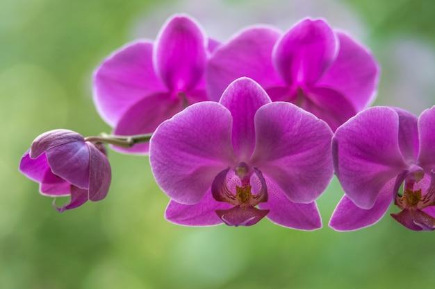 Orchidée pourpre brillant sur un fond de bokeh vert