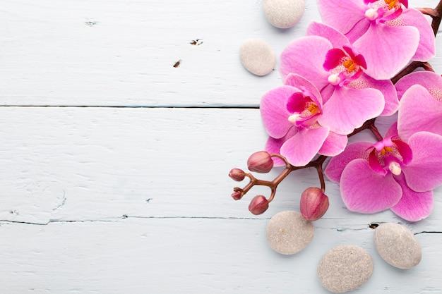 Orchidée rose avec des bourgeons. carte de voeux.