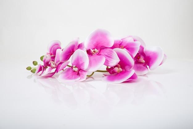 Orchidée rose isolé sur fond blanc