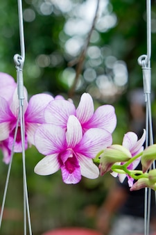 Orchidée violette