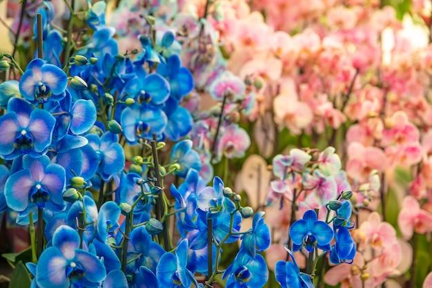 Orchidées colorées dans un magasin de fleurs