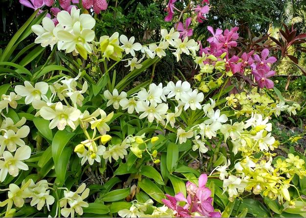 Orchidées d'une couleur différente dans le jardin