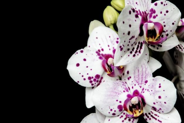 Orchidées exotiques