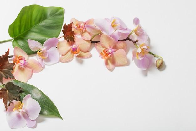 Orchidées sur fond blanc