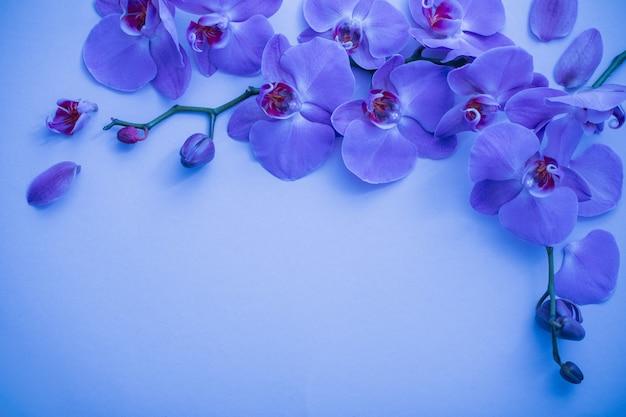 Orchidées sur fond bleu