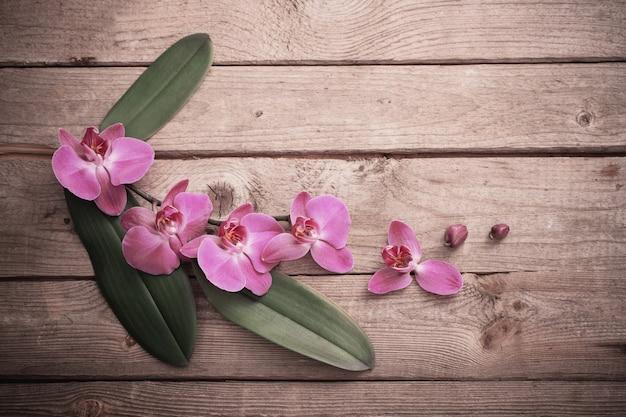 Orchidées sur fond en bois ancien