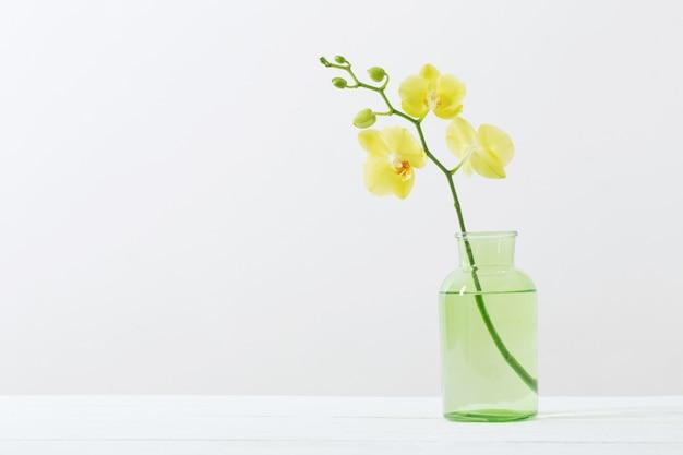 Orchidées jaunes dans un vase sur fond blanc