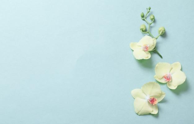 Orchidées jaunes sur fond de papier vert