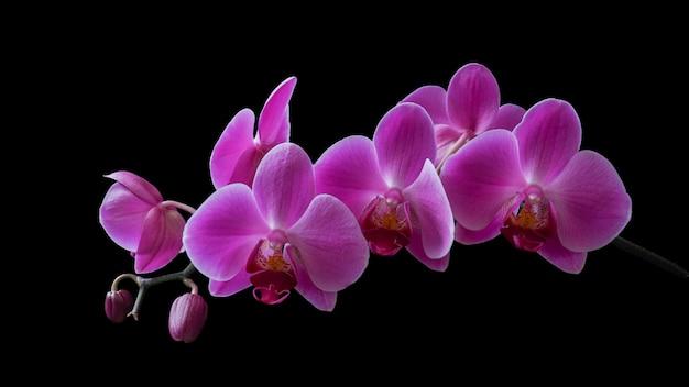 Orchidées naturellement allumées sur une branche