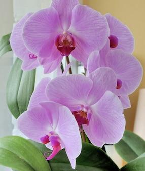 Orchidées avec un papillon sur le fond coloré