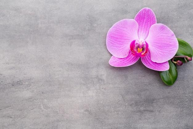 Orchidées roses sur fond gris.