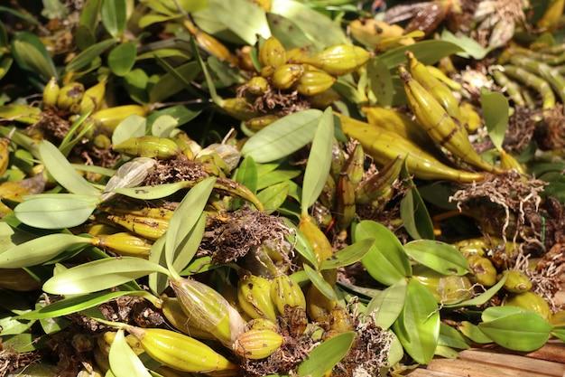 Orchidées sauvages à vendre