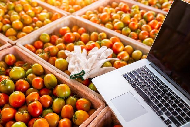 Ordinateur avec des gants, mettre beaucoup de tomates, le concept de commerce de tomates en ligne.