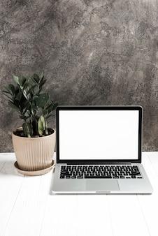 Ordinateur portable sur une table texturée en bois blanche avec une plante en pot contre un mur en béton