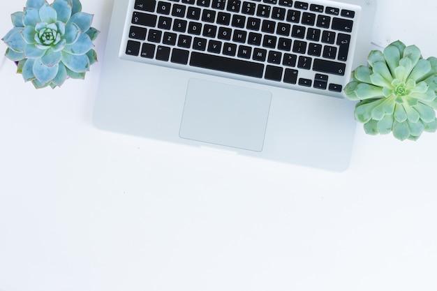 Ordinateur portable et téléphone sur tableau blanc avec des plantes succulentes