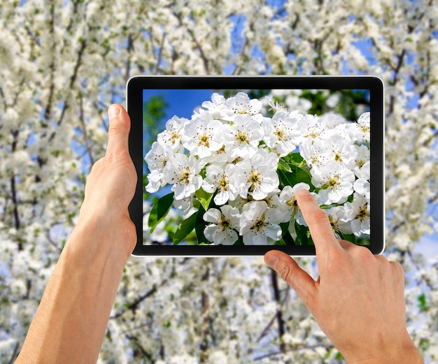 Ordinateur tablette en main pour la publicité