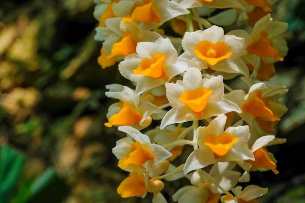 Orhid de forêt tropicale de haute altitude