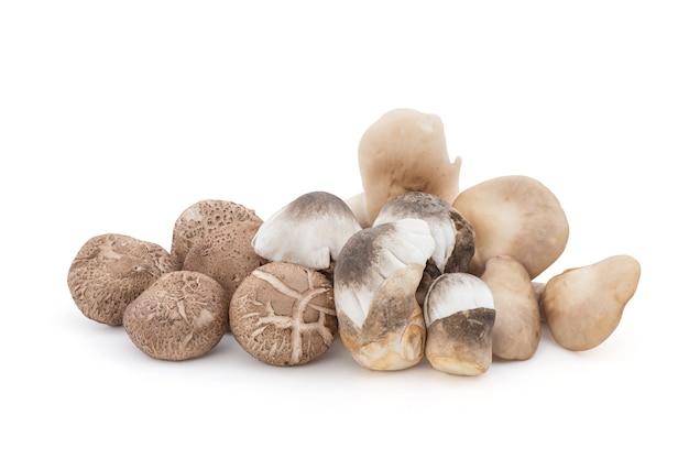 Ormeau frais, volvariella volvacea et champignon shiitake isolé sur blanc avec un tracé de détourage.