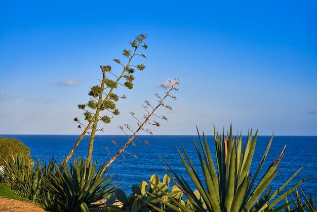 Oropesa de mar à castellon méditerranée