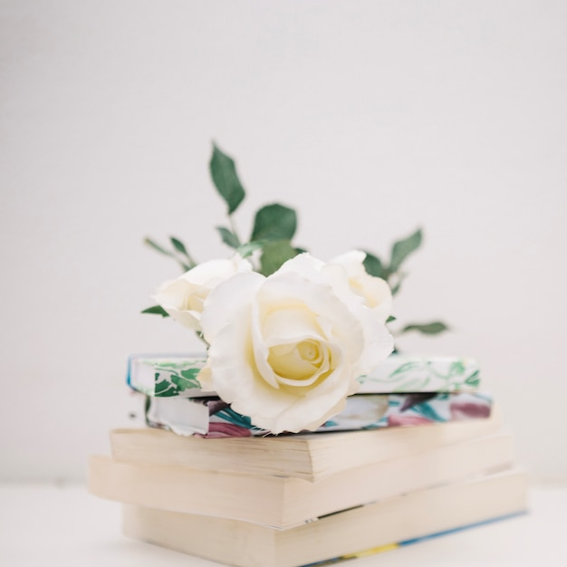 Ose sur une pile de livres