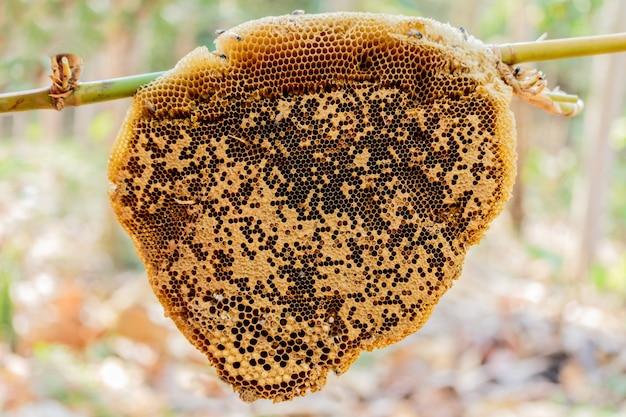 Ourlet en nid d'abeille ou apis florea
