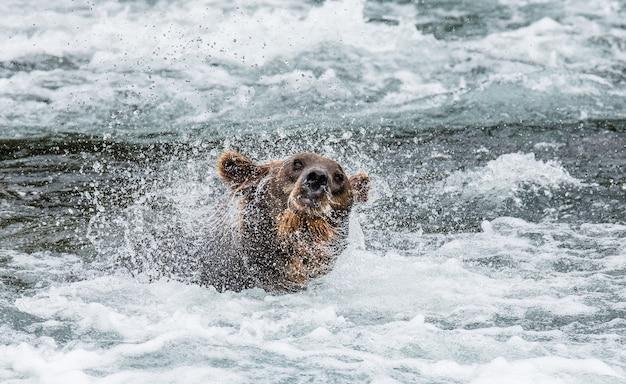 L'ours brun secoue l'eau entouré d'éclaboussures