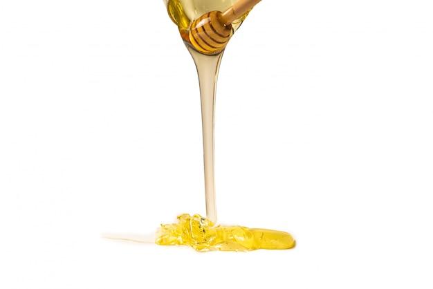 Ourse au miel sur blanc