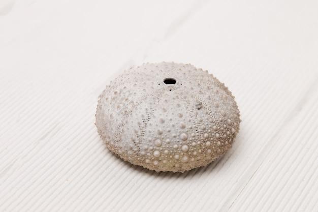 Oursin Blanc Photo Premium