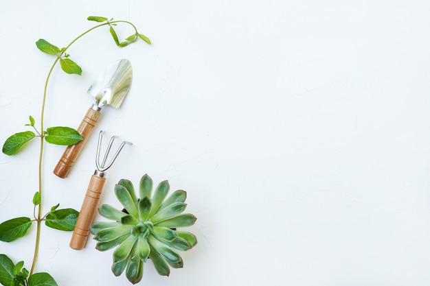 Outils de jardin avec plante succulente en croissance. isolé sur mur blanc.