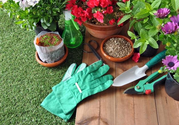 Outils de jardin sur table en herbe et bois avec divers types de plantes