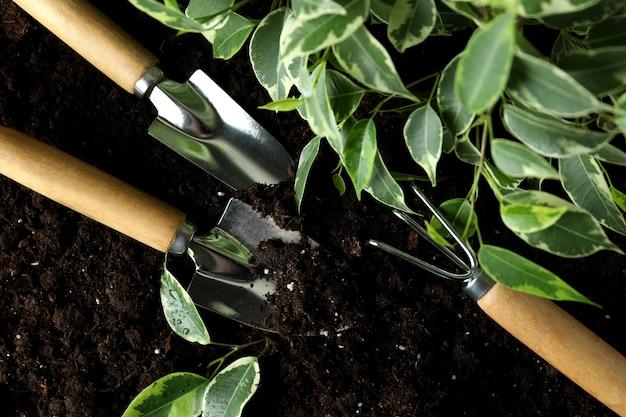 Outils de jardinage et plante sur le sol, gros plan
