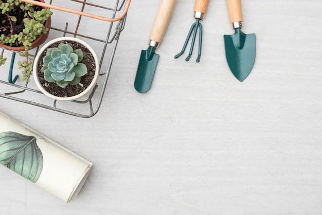 Outils de jardinage et plantes