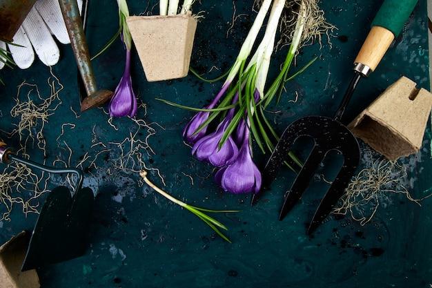 Outils de jardinage, pots de tourbe, fleur de crocus. printemps